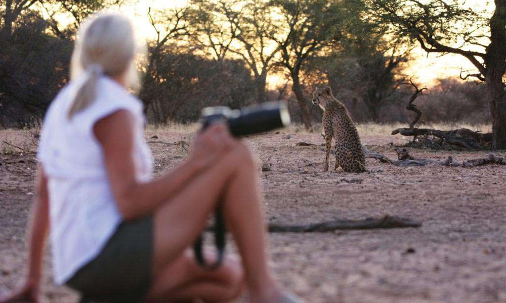Kalahari_Cheetah_and_guest