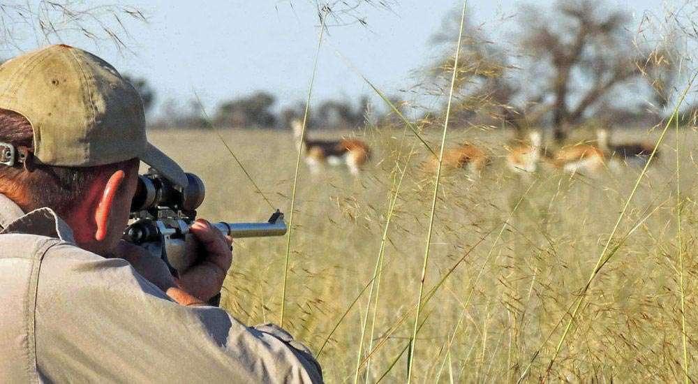 Springbok-aim