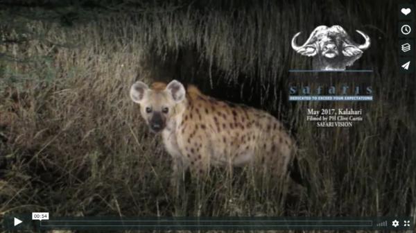 Kalahari Spotted Hyaena