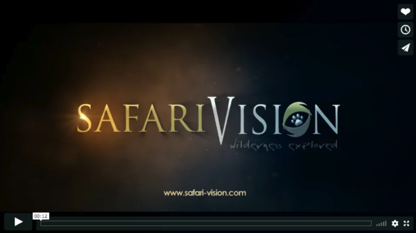 Safari Vision Logo Reveal
