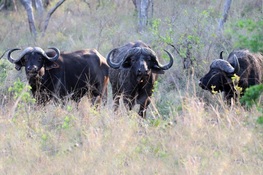Northern Zululand8